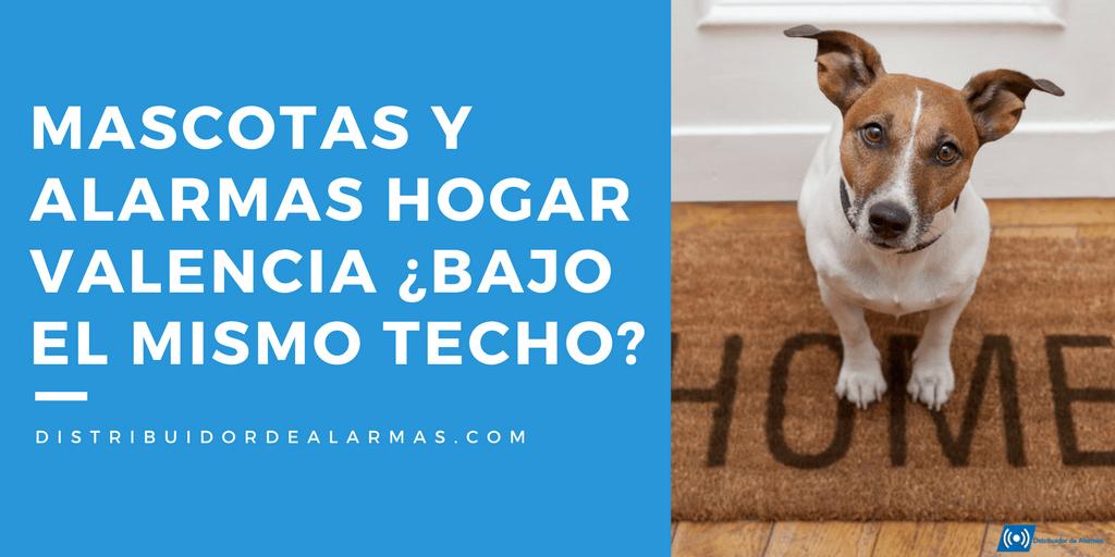 Mascotas y alarmas hogar Valencia ¿Bajo el mismo techo?