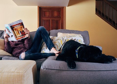 Alarmas y mascotas: 3 opciones para combinarlas